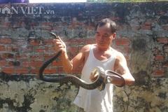 Chết khiếp đàn rắn đen trũi, dài ngoằng chạy khắp vườn ở Ninh Bình
