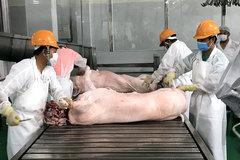 'Soi kính hiển vi' mới thấy Việt Nam xuất khẩu một ít lợn sữa, trứng muối