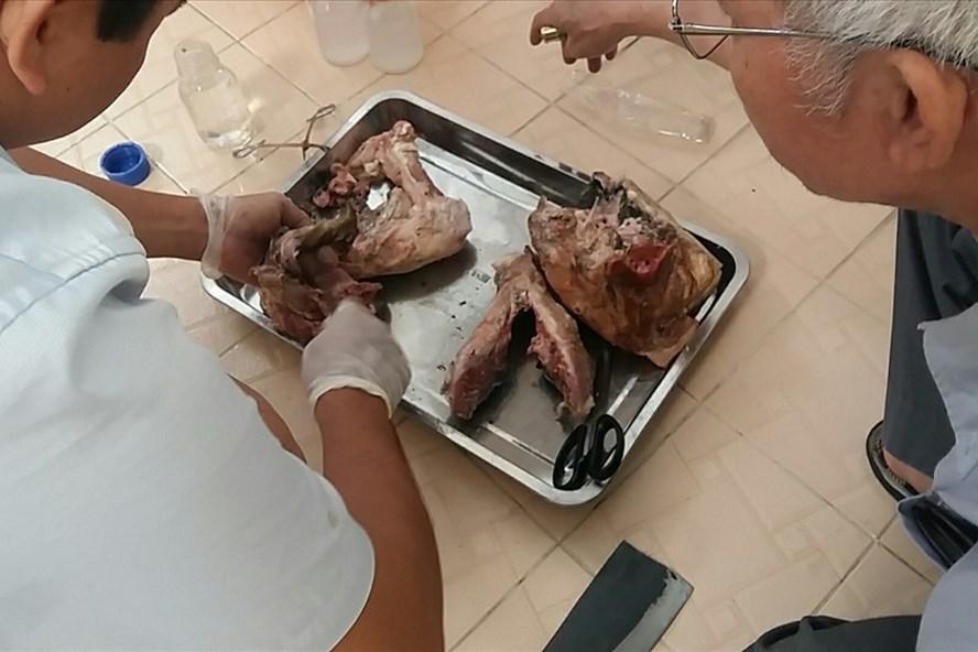 Sán lợn gạo,ký sinh trùng