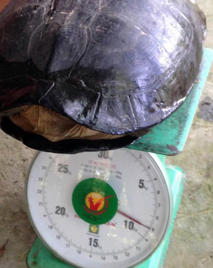rùa lạ