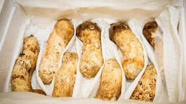 Hàn Quốc công bố kết quả kiểm nghiệm 2 tấn nấm được Triều Tiên tặng