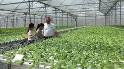 Bí thư tỉnh học trồng chanh leo, cả ban thường vụ lo bán nhãn