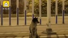 Chủ qua đời, chú chó vẫn ngồi đợi suốt ba tháng