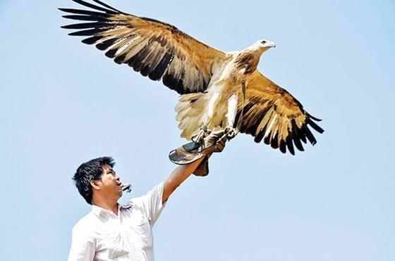 Cao thủ tiết lộ công phu thú chơi loài chim 'chúa tể sa mạc'