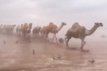 Cảnh tượng chưa từng thấy trên sa mạc Ảrập Xêút