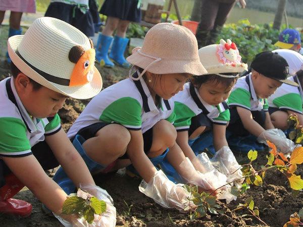 Trường Green Star - nơi trẻ học, trải nghiệm và sáng tạo