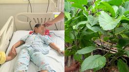 Tự chữa táo bón tại nhà, bé trai 4 tuổi nguy kịch