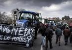 Trung Quốc làm nông dân Pháp mất ăn mất ngủ
