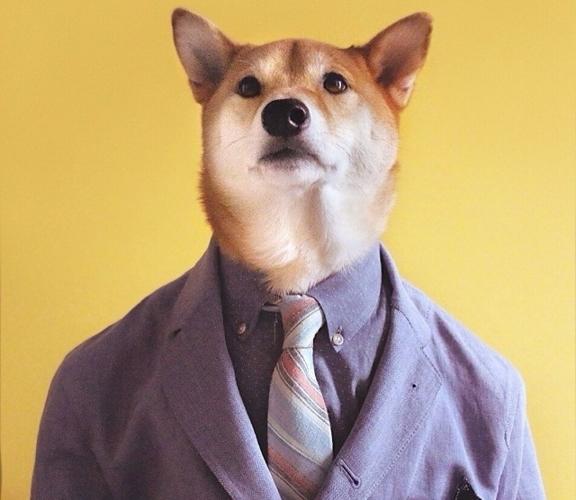 Ngắm mẫu chó cực ngầu, lương tháng hàng trăm triệu