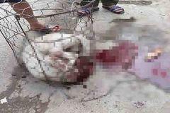 Hà Nội: Dân đánh chết chó Pitbull cắn nữ chủ nhà và hàng xóm