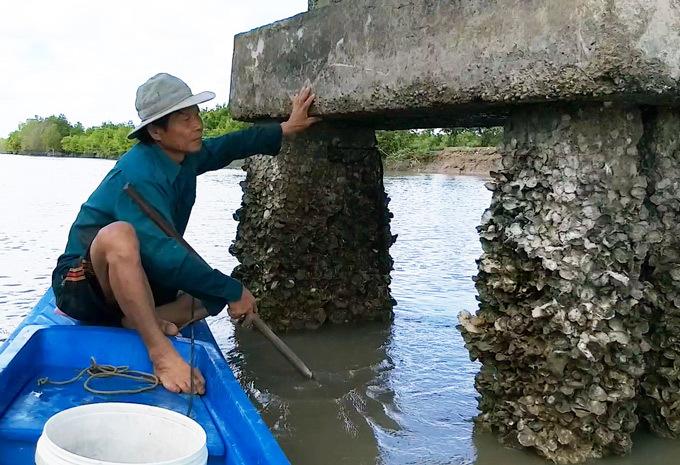 Len lỏi, lặn lội, dùng búa đục săn đặc sản 'Viagra' dọc sông Cà Mau