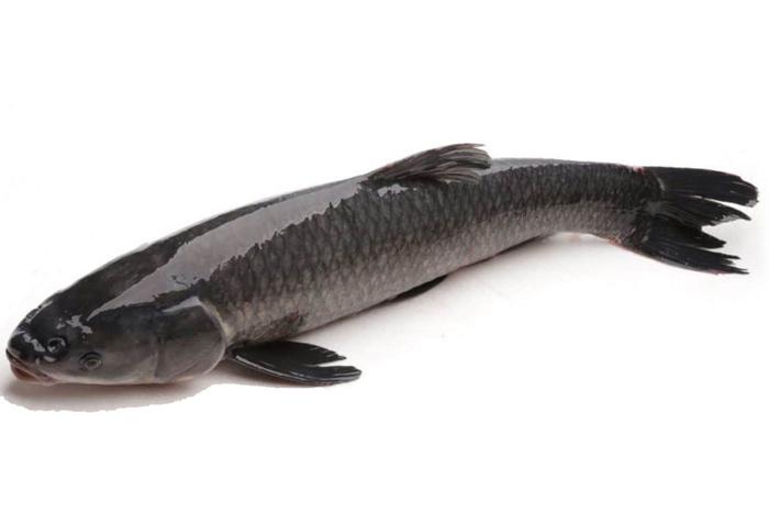 Người phụ nữ nhập viện cấp cứu vì ăn cá, cảnh báo bộ phận gây nguy hiểm