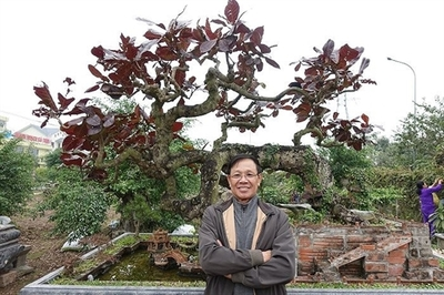 Cây 10 tỷ đồng của ông Phan Văn Vĩnh khủng cỡ nào?
