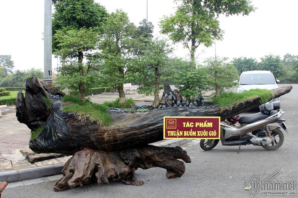 Siêu cây dát vàng giá chục tỷ đọ dáng cùng cây 200 tuổi ở Hà Nội