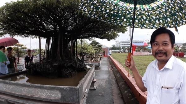 cây sanh,sanh cổ,cây cảnh