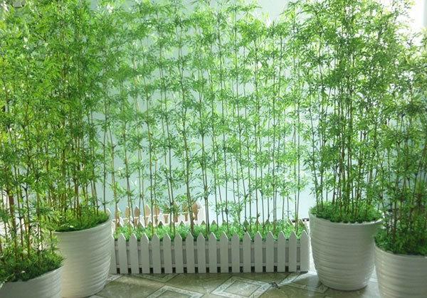 trồng cây phong thuỷ,phong thuỷ cổng nhà,chọn cây phong thuỷ,phong thuỷ nhà cửa