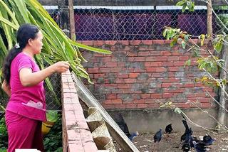 Nuôi loài chim để giữ nhà như chó, bán 1-1,5 triệu đồng mỗi con