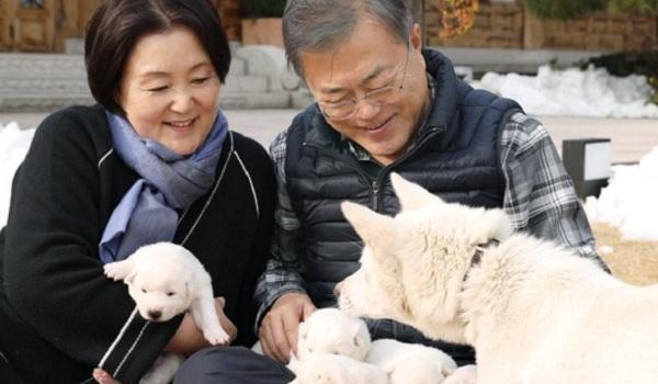 Tổng thống Hàn vui đùa với 'quốc khuyển' từ Triều Tiên