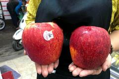 Dân Hà thành phát 'sốt' với trái táo to như quả bưởi