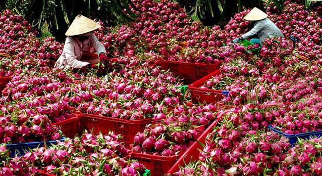 nông sản Việt,Nông sản Việt,nông nghiệp Việt Nam,xuất khẩu nông sản