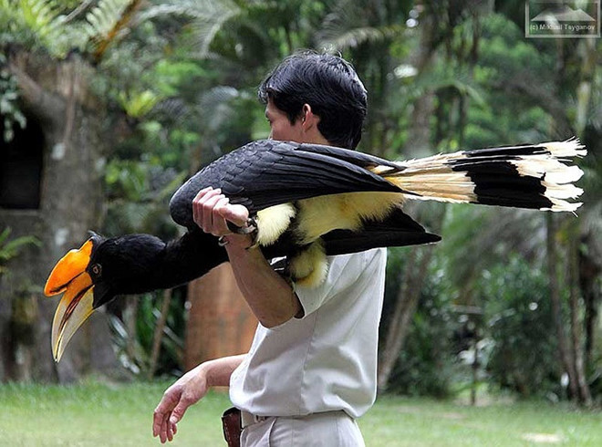Vẻ đẹp huyền hoặc của loài chim quý có tên Phượng Hoàng Đất ở Tràng An