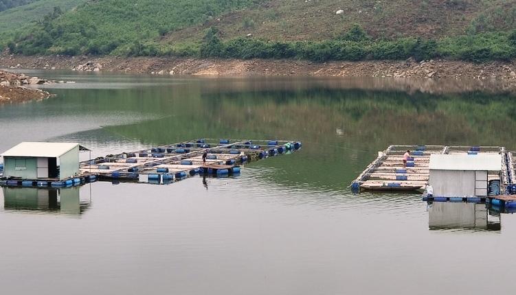 Quảng Nam: Hơn 50 tấn cá chết nổi trắng mặt hồ