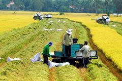 Ngành Nông nghiệp triển khai đồng loạt các giải pháp, quyết thực hiện 'mục tiêu kép'