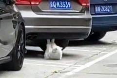 Dân mạng sốc thấy mèo tập gập bụng như người