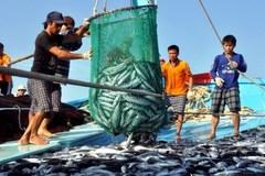 Bình Định: Ngư dân phải khai báo nguồn gốc thủy sản đánh bắt