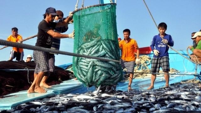 ngư dân,Bình Định