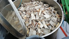 Nam Phi: 6 người Việt ra tòa vì cáo buộc nấu cao hổ, sư tử