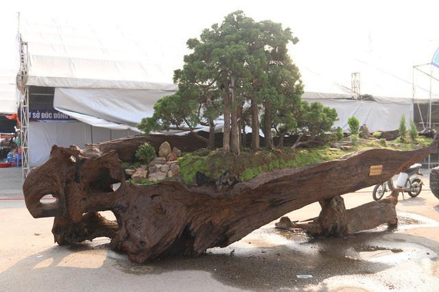 cây cảnh,siêu cây