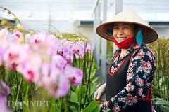 Bỏ Trung Quốc về Việt Nam: Ông trùm lan hồ điệp thu chục tỷ mỗi năm