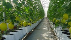 Quảng Ninh tái cơ cấu nông nghiệp theo hướng thâm canh