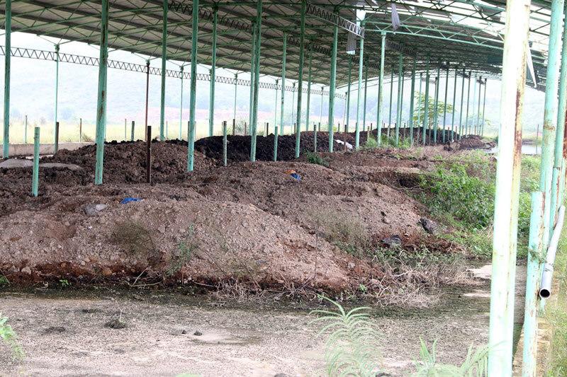 Trại bò 2.000 tỷ hoang tàn khó tin