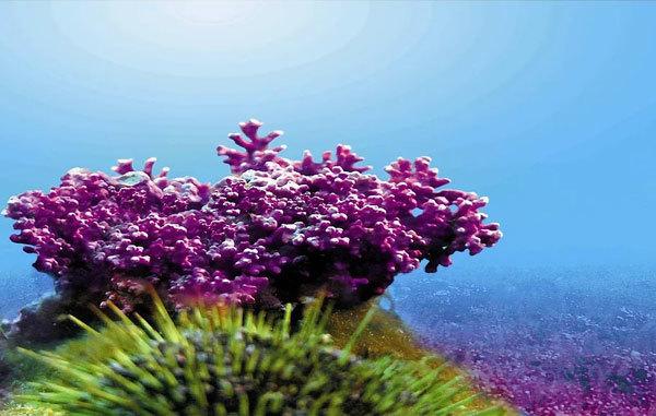 Lí do mẹ nên chọn canxi tự nhiên từ tảo biển cho bé