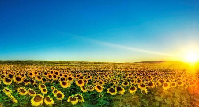 Đăng ảnh chụp hoa hướng dương trên Facebook có giúp bệnh nhi được nhận 30.000đ?