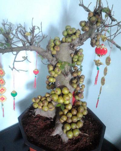 cây cảnh phong thuỷ,phong thuỷ chọn cây,cây phong thuỷ trong nhà