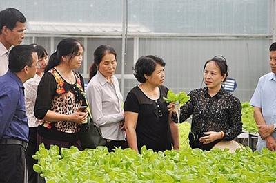 Độc đáo du lịch nông nghiệp công nghệ cao ở Quảng Ninh