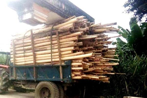Xe gỗ 'chở' cả... cổng làng chạy trên đường