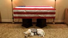 """Dân mạng dậy sóng vì chú chó trung thành của Bush """"cha"""""""