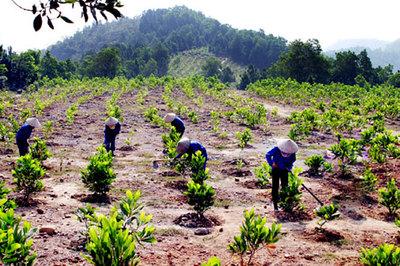 Bước chuyển trong công tác trồng rừng ở Quảng Ninh