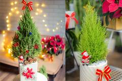 Mốt chơi 'cây thông' lạ mùa Noel năm nay, chủ shop thu 50 triệu/ngày