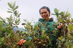 Hướng đi cho nông sản người nghèo