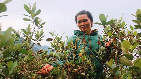 giảm nghèo,nông sản