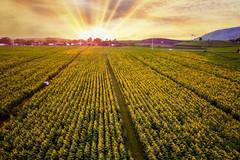 Du lịch nông thôn - 'mỏ vàng' cho nông dân Việt