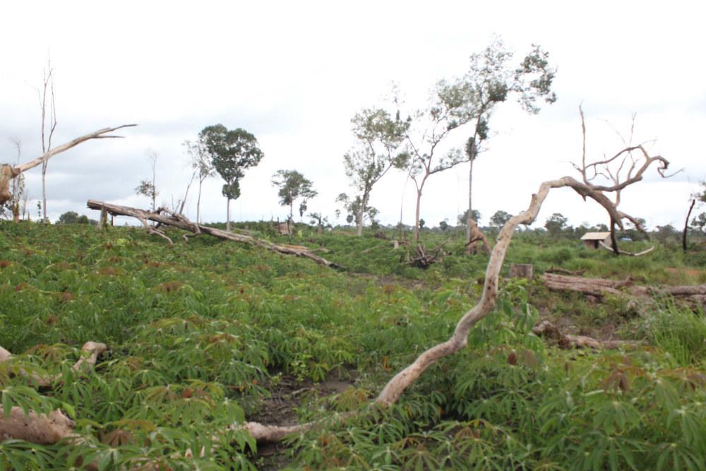 Cách chức phó chủ tịch huyện 'ăn' đất rừng