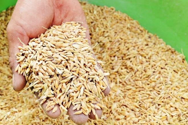 Xuất cấp 1.200 tấn hạt giống hỗ trợ người dân gặp thiên tai
