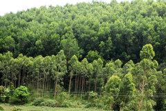 Làm giàu bền vững từ rừng