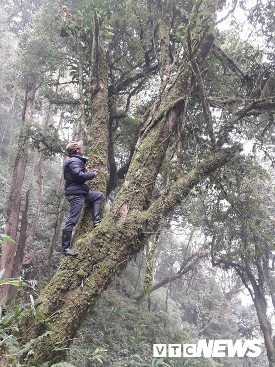 Bí ẩn khu rừng báu vật ngàn năm tuổi trên đỉnh Tây Côn Lĩnh